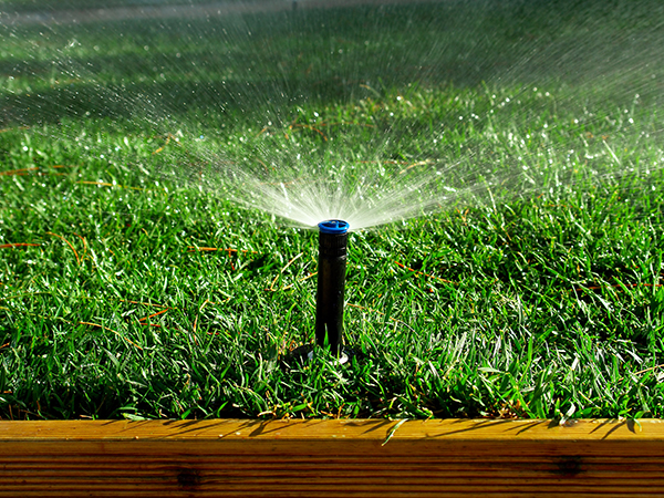 summer watering grass fertilizing