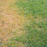 summer patch fungal lawn disease large patch of yellow grass next to healthy grass